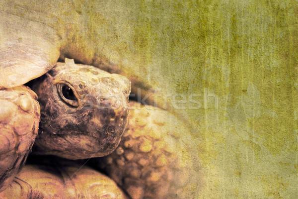 Teknősbéka grunge kép öreg textúra térkép Stock fotó © chrisroll