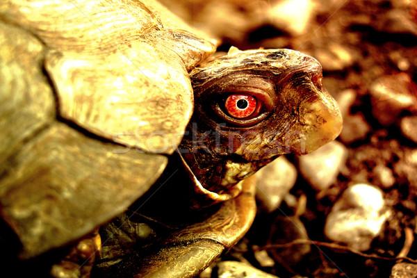 Furcsa teknősbéka közelkép természet művészet narancs Stock fotó © chrisroll