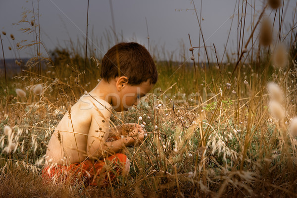 young child in nature Stock photo © chrisroll
