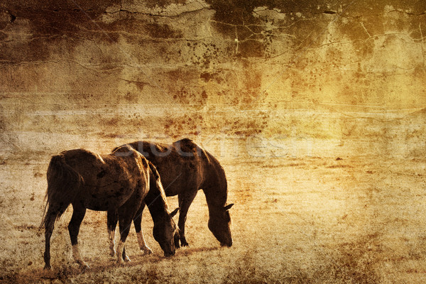 Horses on  a grunge background Stock photo © chrisroll