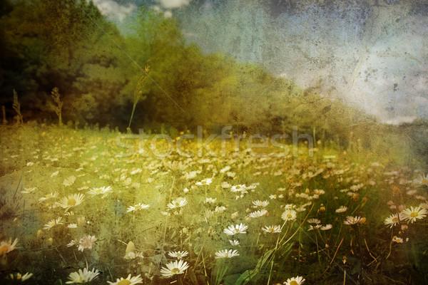 Grunge vintage foto prairie ochtend licht Stockfoto © chrisroll