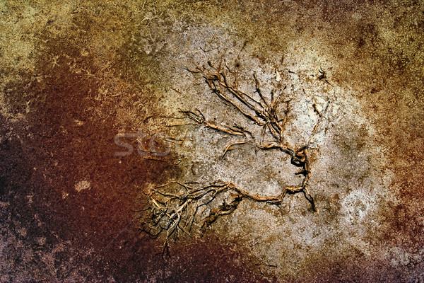Növény száraz föld magas döntés textúra Stock fotó © chrisroll