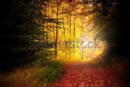Najaar bos boom hout natuur landschap Stockfoto © chrisroll