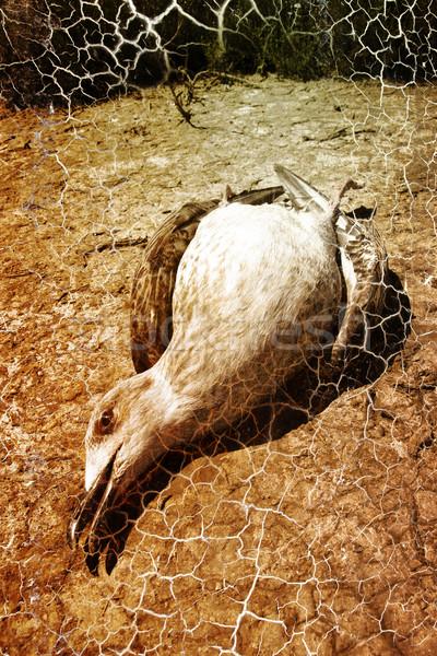 чайка солнце фон земле лет птица Сток-фото © chrisroll