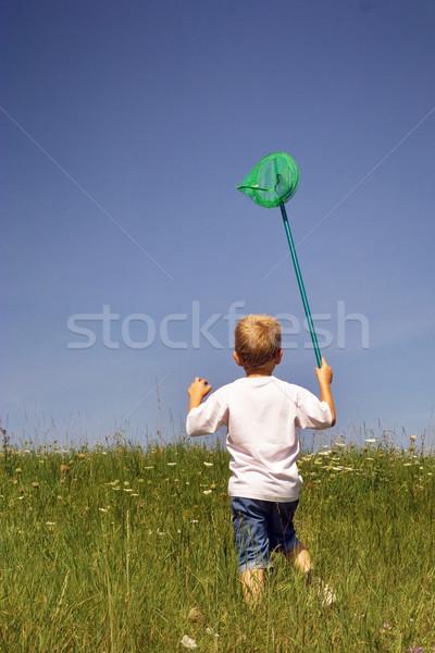 Borboleta caçador natureza grama paisagem verão Foto stock © chrisroll
