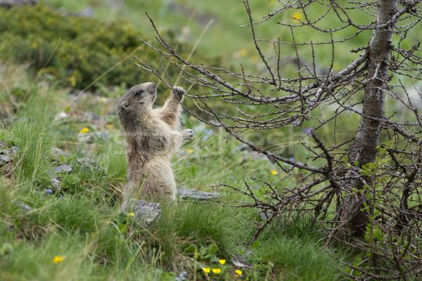 Alpino grama primavera natureza fundo montanha Foto stock © chrisroll