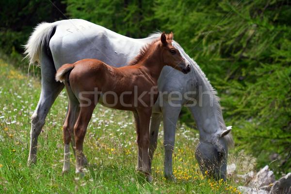 Stock photo: horses grazing in a prairie