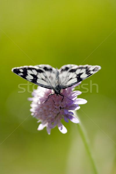 butterfly on a flower Stock photo © chrisroll