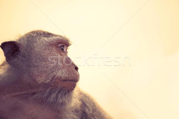 Selvatico scimmia profilo cielo fauna selvatica faccia Foto d'archivio © cienpies