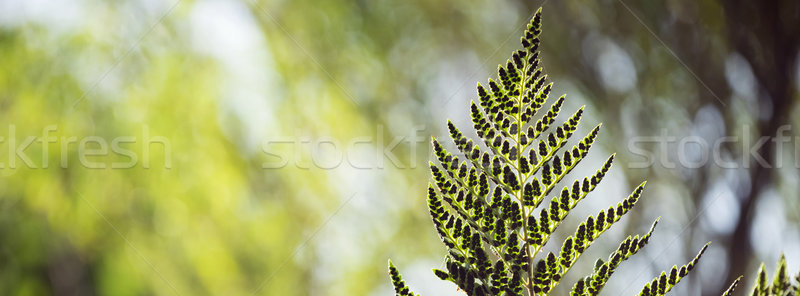 Green forest environment leaf background Stock photo © cienpies