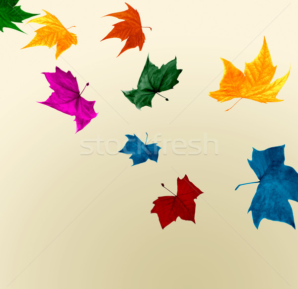 Autumn leaves shocking colors Stock photo © cienpies