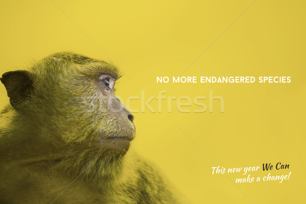 Endangered species awareness with wild monkey Stock photo © cienpies