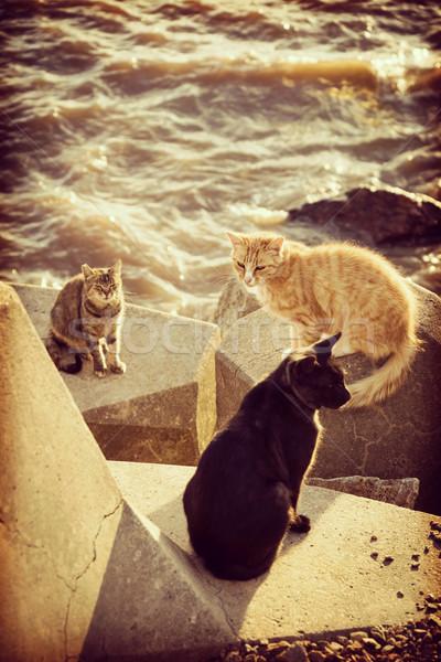 Cat standing on pier next to ocean coast on summer Stock photo © cienpies