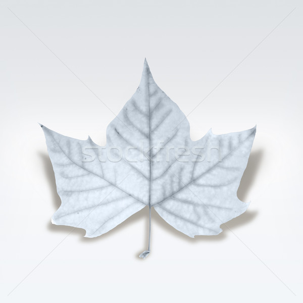 Decorative fashion winter leaf isolated over white with clipping Stock photo © cienpies
