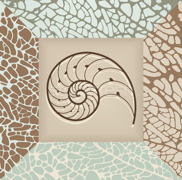 Nautilus shell background. Stock photo © cienpies