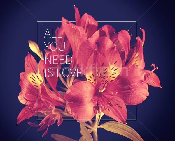 Love quote vintage flower background Stock photo © cienpies