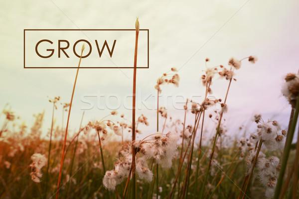 расти цитировать диких цветов вдохновляющий пейзаж Сток-фото © cienpies