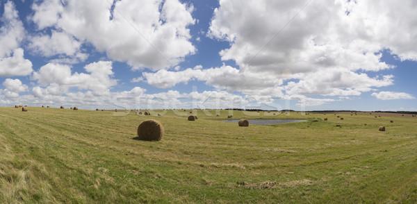 Vidéki mező panorámakép tájkép széna vidék Stock fotó © cienpies