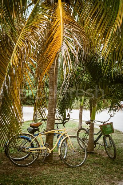Denk groene fietsen zomervakantie toeristische palmboom Stockfoto © cienpies