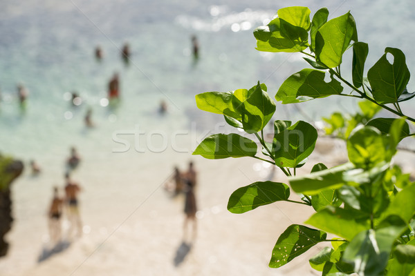 Blur background of people on beach with green leaf Stock photo © cienpies