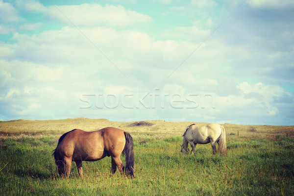 Wild horses couple landscape in vintage style Stock photo © cienpies