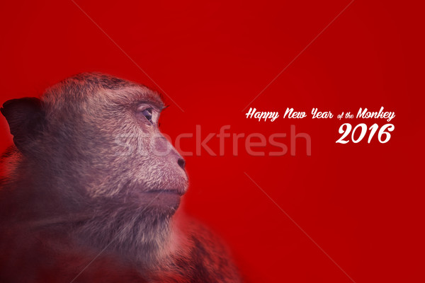 Chinese new year design with monkey portrait Stock photo © cienpies