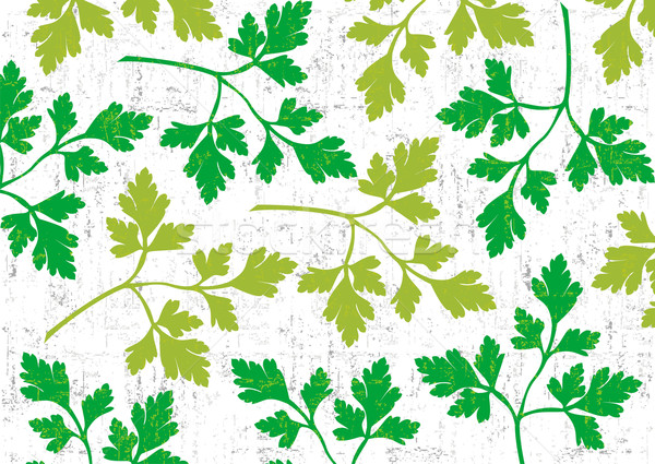 Parsley background on white. Stock photo © cienpies