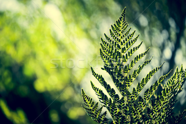 Retro nature environment with plant leaf Stock photo © cienpies