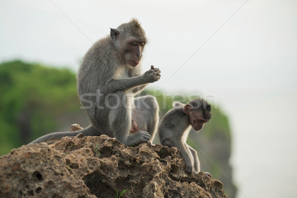 Wild monkey habitat jungle background wildlife Stock photo © cienpies