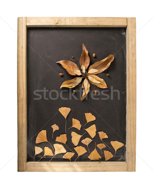 Fall composition blackboard autumn flower leaf Stock photo © cienpies