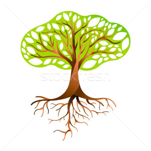 Groene boom wortels boom groene bladeren natuur Stockfoto © cienpies