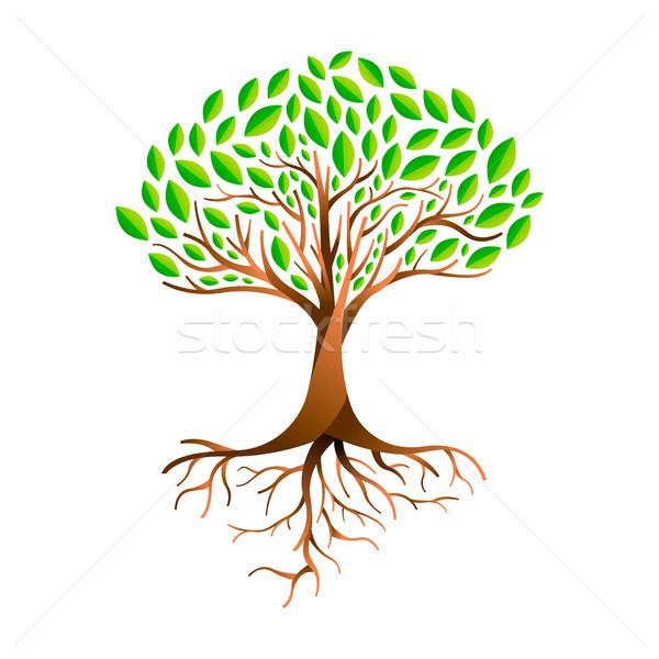 Groen blad boom wortels groene bladeren natuur Stockfoto © cienpies