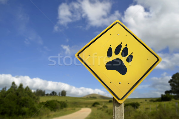 Wildlife animal concept with paw icon on road sign Stock photo © cienpies