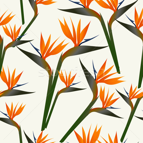 Paradise bird flower pattern Stock photo © cienpies