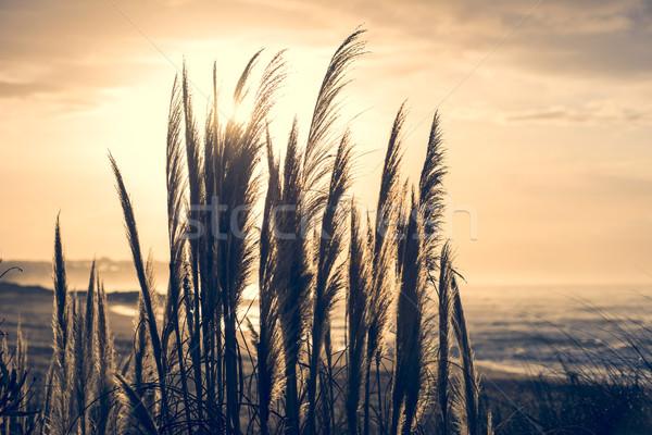 Beach landscape with wild plant and sea coast Stock photo © cienpies
