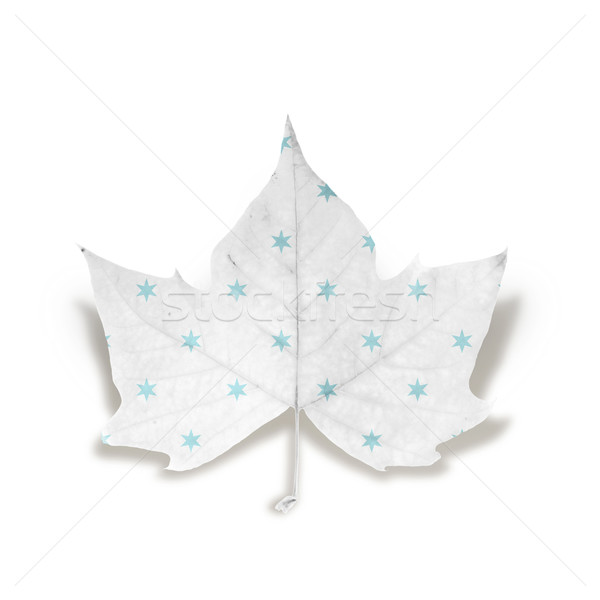 Fashion Winter leaf isolated over white with clipping path Stock photo © cienpies