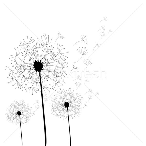 Dandelion isolado branco vetor arquivo Foto stock © cienpies