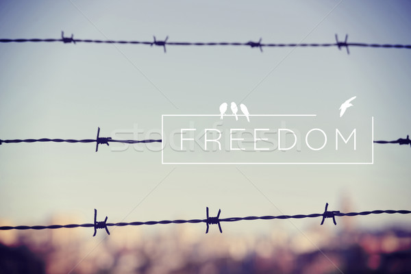 Freedom quote concept barbed wire background Stock photo © cienpies