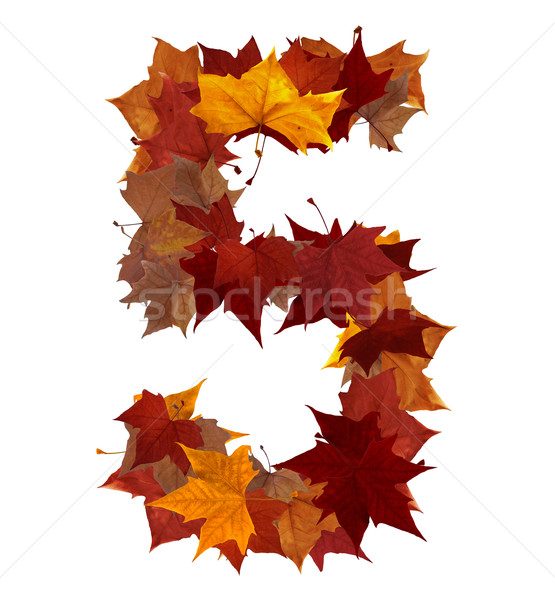 Stock photo: Number five multicolored fall leaf composition isolated