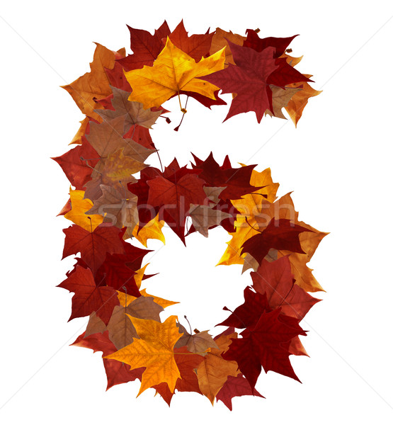 Number six multicolored fall leaf composition isolated Stock photo © cienpies