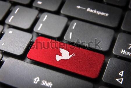 青 キーボード さえずり 鳥 キー ソーシャルネットワーク ストックフォト © cienpies