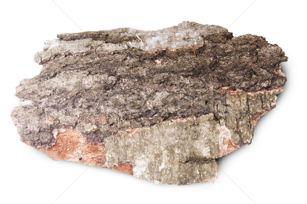 Piece Of Dried Bark Of Old Birch Tree Stock photo © Cipariss