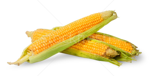 Several ripe cobs of corn partially peeled Stock photo © Cipariss
