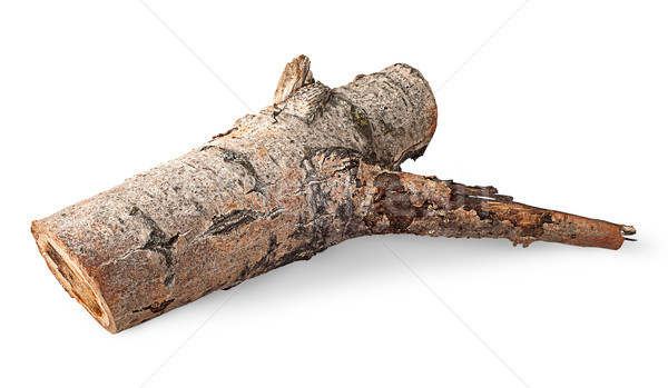 Single poplar log horizontally flipped Stock photo © Cipariss