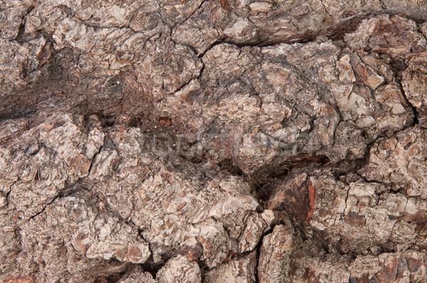 Abstract schors oude eiken textuur boom Stockfoto © Cipariss