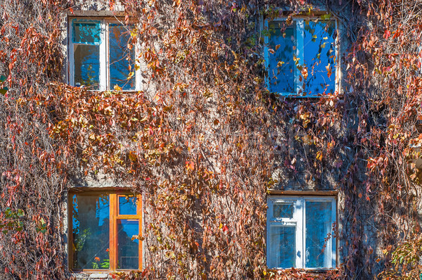 Fasada domu winogron winorośli spadek Zdjęcia stock © Cipariss