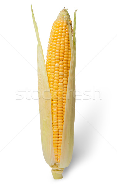 Purified ear of corn with leaves Stock photo © Cipariss