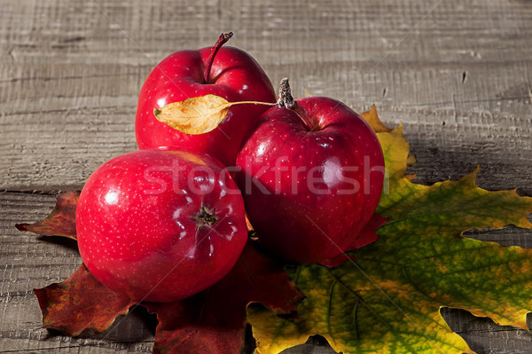 Red apples with maple leaves Stock photo © Cipariss