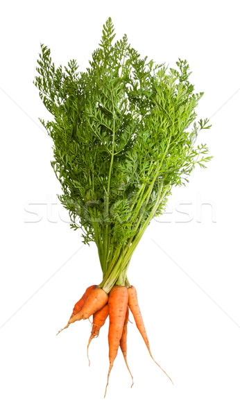 Bunch Of Fresh Carrots With Green Tops Stock photo © Cipariss
