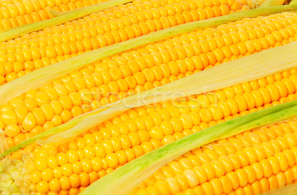 Stacked near peeled corn cobs Stock photo © Cipariss